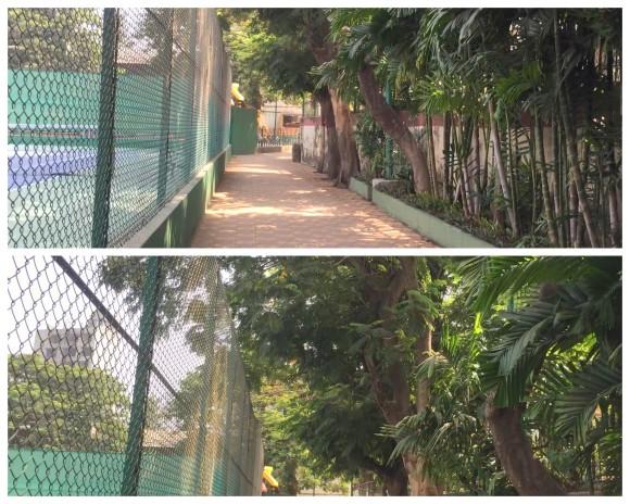 Park collage